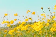 Gelbe Blumenfeldwiese Stockbild