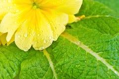 Gelbe Blumengrünblätter Stockfotos