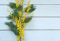 Gelbe Blumenmimose auf weißem Holztisch Stockfoto