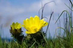 Gelbe Blumennahaufnahme Lizenzfreies Stockfoto