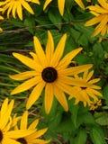 Gelbe Blumentapete lizenzfreie stockfotos