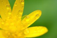 Gelbe Blumentropfen lizenzfreies stockfoto