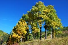 Gelbe Bäume im Tal Stockbild