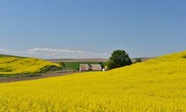 Gelbe Canolablume und -bauernhaus in Palouse Lizenzfreies Stockbild
