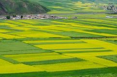 Gelbe Canolablumenfelder stockfoto