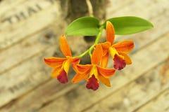 Gelbe Cattleya-Orchidee mit rauem Holztischhintergrund Stockfotos
