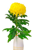 Gelbe Chrysantheme Lizenzfreie Stockbilder