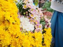 Gelbe Chrysantheme blüht Blüte in Bagan-Markt Stockbilder
