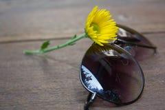 Gelbe Chrysantheme, Blume mit Sonnenbrille Stockbild