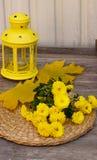 gelbe Chrysantheme, gelbe Ahornblätter Stockbilder