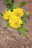 Gelbe Chrysanthemenblumen auf hölzernem Hintergrund Stockbild