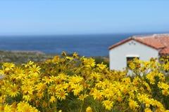 Gelbe Coreopsis-Blumen mit Meerblick Lizenzfreie Stockbilder