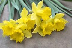 Gelbe daffodill Blumen auf einem hölzernen Hintergrund lizenzfreie stockbilder