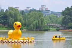Gelbe Enten im schwarzer Bambus-Park in Peking Stockbild