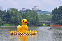 Gelbe Enten im schwarzer Bambus-Park in Peking Stockfotografie