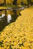 Gelbe Fall-Blätter durch einen Strom Lizenzfreies Stockbild