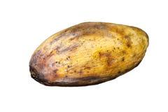 Gelbe faule Mangofrucht lokalisiert auf Weiß stockfotografie
