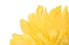 Gelbe Federn Lizenzfreie Stockfotografie