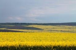 Gelbe Felder Stockbild