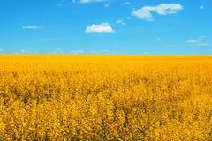 Gelbe Felder am Sommer Stockbild