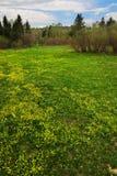 Gelbe Felder und Bäume. Sibir. lizenzfreie stockfotografie