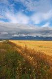 Gelbe Felder, Wolken und Berge. Stockfotografie