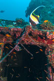 Gelbe Fische nähern sich Schiffbruch lizenzfreie stockfotos