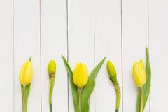 Gelbe Frühlingsblumen über weißem Holztisch Stockbild