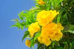 Gelbe Frühlingsblumen Stockfoto