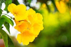 Gelbe Frühlingsblumen Stockfotos