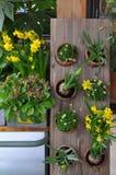 Gelbe Frühlingsblumen in den Töpfen Lizenzfreies Stockbild