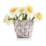 Gelbe Frühlingsblumen im Weidenkorb Stockfotos