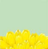 Gelbe Frühlingstulpen Stockfotografie