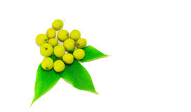 Gelbe Frucht Stockbild