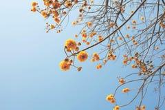 Gelbe funkelnde gelbe Blumenansicht stockbilder