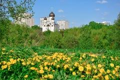 Gelbe Gänseblümchen auf dem Hintergrund der Kirche lizenzfreie stockfotografie