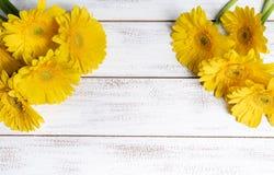 Gelbe Gänseblümchen auf einem weißen Plankenhintergrund mit Kopienraum lizenzfreies stockfoto