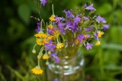 Gelbe Gänseblümchen und Glocken in einem Glas Stockbild
