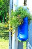 Gelbe Gänseblümchenbüsche in den Stiefeln Stockfotos