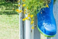 Gelbe Gänseblümchenbüsche in den Stiefeln Lizenzfreies Stockfoto