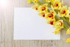 Gelbe Gladiole Lizenzfreie Stockbilder