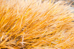 Gelbe Grasbeschaffenheit Lizenzfreies Stockfoto