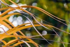 Gelbe Grashalme im Herbst Stockfotografie