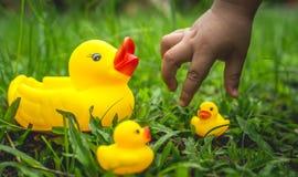 Gelbe Gummi- Ente und Kind` s Hand Stockfotos