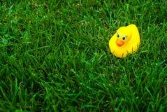 Gelbe Gummiente auf einem grünen Rasen stockbild
