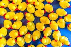 Gelbe Gummienten, die auf Wasser schwimmen Stockbilder