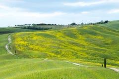 Gelbe Hügel des Rapssamens mit Zypressen und grünen Wiesen H?gel von Toskana Landschaft Val d ?Orcia im Fr?hjahr lizenzfreie stockbilder