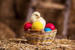 Gelbe Hühner auf einem Heuschober, kleine gelbe Hühner, wenig slee Lizenzfreie Stockfotografie