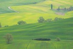 Gelbe H?gel des Rapssamens mit Zypressen und gr?nen Wiesen in Val d ?Orcia, Toskana stockbild