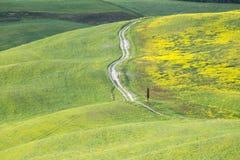 Gelbe H?gel des Rapssamens mit Zypressen und gr?nen Wiesen H?gel von Toskana Landschaft Val d ?Orcia im Fr?hjahr lizenzfreies stockfoto